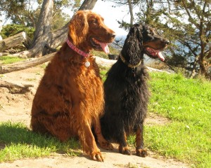 At our favorite off leash dog area- The Michael Douglas Family Preserve in Santa Barbara!